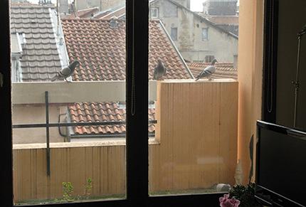Pigeons (après)