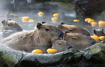 capybaras-japonais.jpg