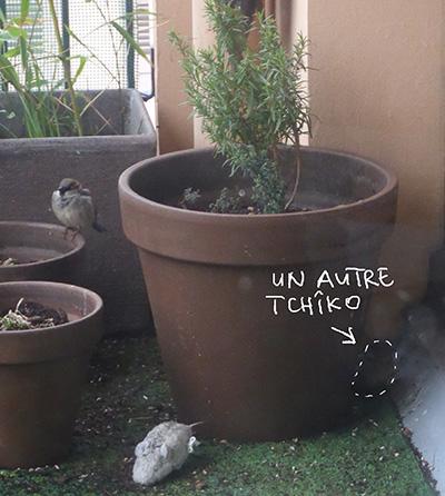 tchiko